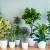 Houseplants You Can Grow @ Irondequoit Library