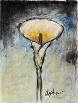 Calla Lily - Uploaded by Frank Argento