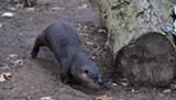 Uploaded by Seneca Park Zoo