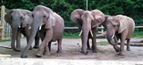 b9d71c50_african-elephant-2015-lindsay-brinda.jpg