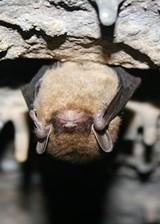 3670fedb_little_brown_bat_picture.jpg