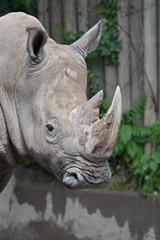 f85a485b_rhino_2015_marie_kraus_bill_533x800_.jpg