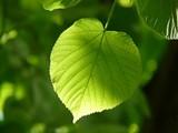 06f27379_leaf-55859_1920.jpg