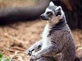 f24c8c6c_lemur-2015-mike-martinez-1-e1461546377600-800x600.jpg