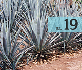 70fa05a3_july19_agave_2048x2048.png