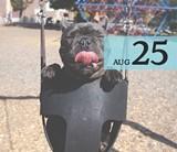 68a23b7e_aug25_dogs_2048x2048.jpg