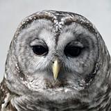 5be10d2a_owl.jpg