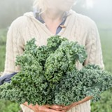 PHOTO COURTESY LISA BARKER - Organic Dwarf Blue Vates Kale at Fruition Seeds, the Naples-based organic seed packet company that specializes in seeds adapted for the northeast states.