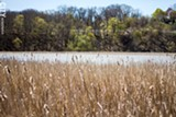 PHOTO BY KEVIN FULLER - The Genesee River at Turning Point Park, where environmentalists hope to restore a wetland.
