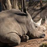 02c2590b_rhino-2016-walter-brooks.jpg
