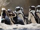 03984dd6_penguin-2014-d-walter-brooks-e1461543002777.jpg