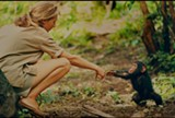"PHOTO COURTESY ABRAMORAMA - A young Jane Goodall in ""Jane."""
