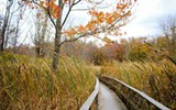 539fc9ee_thousand-acre-swamp-640x400.jpg