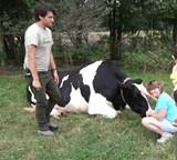 00a4d9a5_carla_and_cow.jpg