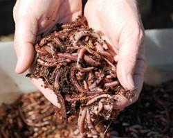 vermiculturejpg