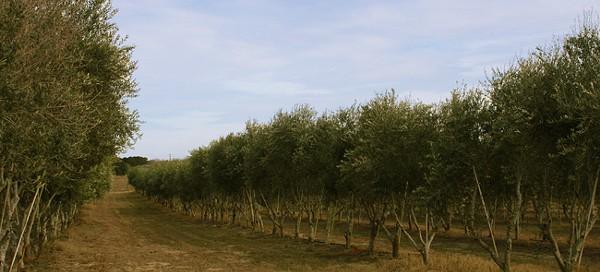 orchard-2014-web-e1409861153469jpg