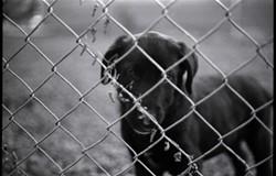 puppy_neighborhoodjpg
