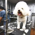 Best Pet Groomer