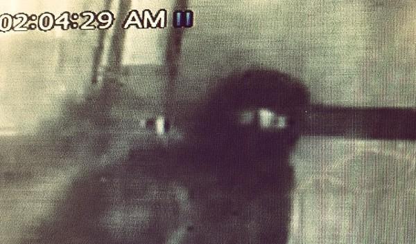 A masked burgler stole $2500 worth of brisket from Jason Dady's Two Bros. BBQ - CHEFJASONDADY/INSTAGRAM