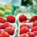 City Guide: Explore San Antonio's unique grocery stores