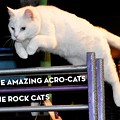 The Amazing Acro-Cats with music by The Rock Cats