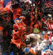 reefproject.jpg