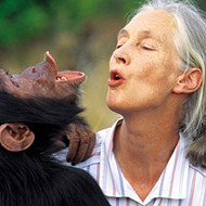 Dr. Jane Goodall talks about new doc 'Chimpanzee'