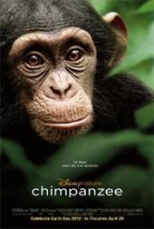 chimpanzeejpg