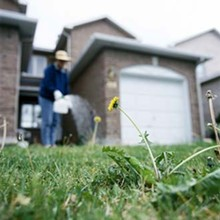 feature-pest-lawn_330jpg