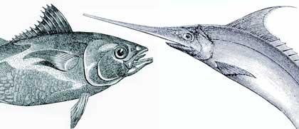 food-tuna_420jpg