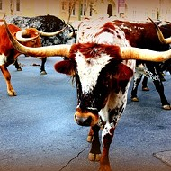 Hey, San Antonio! The rodeo's in town