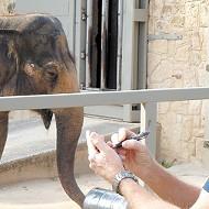 Lucky the Elephant