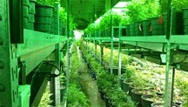 Marijuana Policy and Texas' 84th Legislative Session