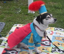 Participant in Fest of Tails Pooch Parade