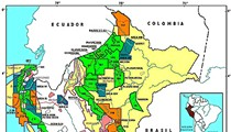 Peru's Parasite?