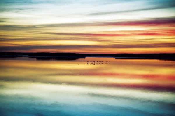 Peter French, Marsh Birds Reflected (Bright). - COURTESY PHOTO