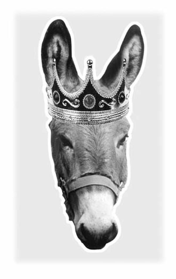 news-donkey-fin_330jpg