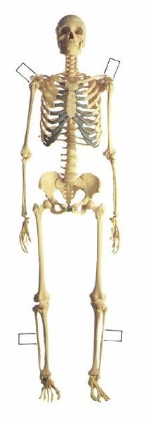 skeleton_220jpg
