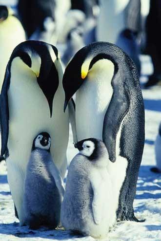 screens-penguins2_330jpg