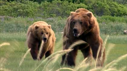 screens-grizzly1_420jpg