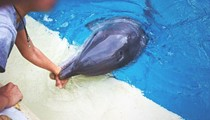 SeaWorld Bites, or Does It?: On the Dilemma of Dolphins, Kids and Captivity