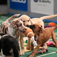 San Antonio Strays to be Featured in Puppy Bowl XI