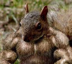 squirreljpg