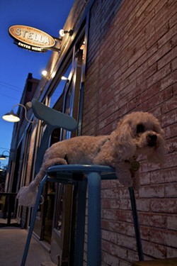 Top 10 restaurants to dine with your dog in san antonio for Dog house san antonio