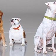 Furry Masterpieces: San Antonio Artists Immortalize Pets with Custom Portraits