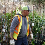 San Antonio Parks and Recreation to Give Away 1,500 Fruit and Nut Trees This Month