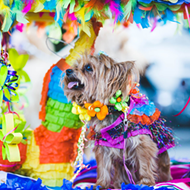 San Antonio Humane Society Will Livestream Virtual Fiesta Pet Parade