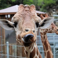 The San Antonio Zoo Announces Reopening Date