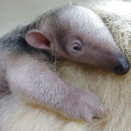 San Antonio Zoo Welcomes Births of Cute Babies From Across the Animal Kingdom