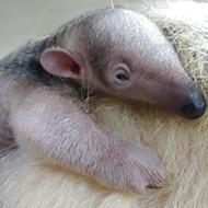 San Antonio Zoo Welcomes Births of Cute Babies From Across the Animal Kingdom